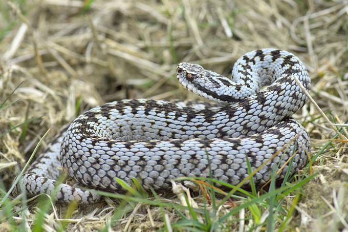 Schlangen In Brandenburg